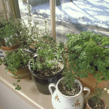 growing herbs in containers continued herbs blurbs. Black Bedroom Furniture Sets. Home Design Ideas